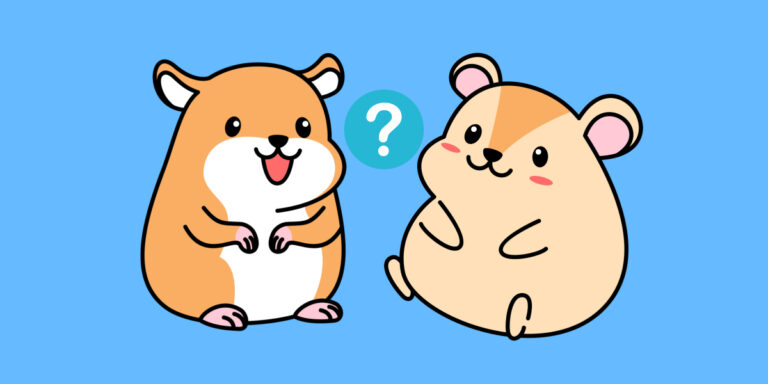 Can You Keep 2 Hamsters in the Same Cage