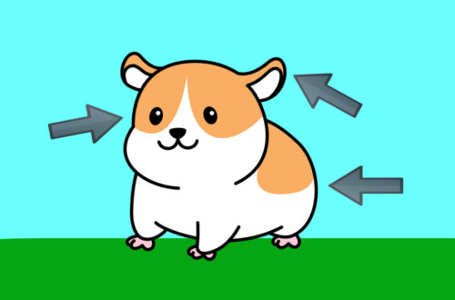 Hamster Body Parts