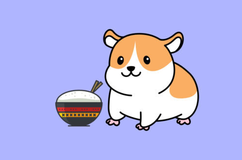 Can Hamsters Eat Rice