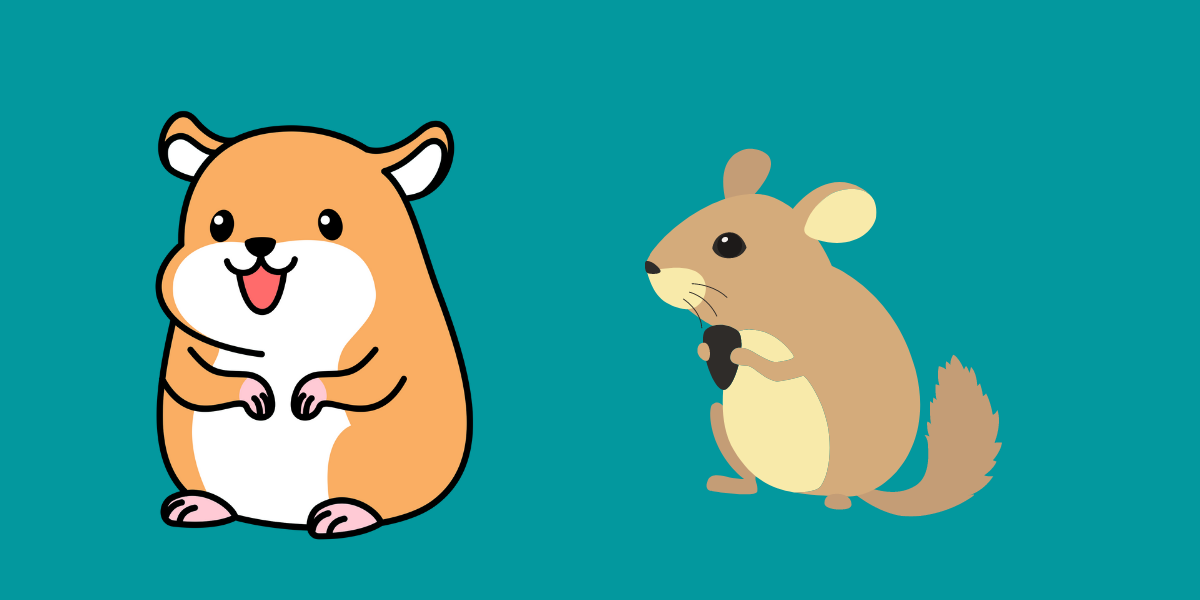 Can Hamsters And Chinchillas Live Together?