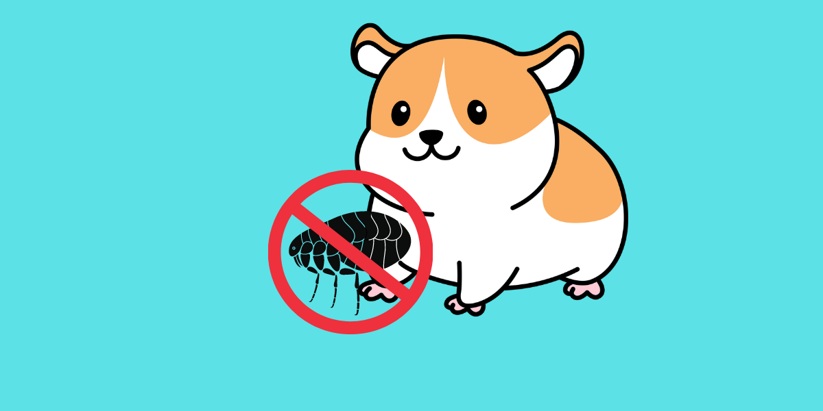 What To Do If Hamsters Have Fleas?
